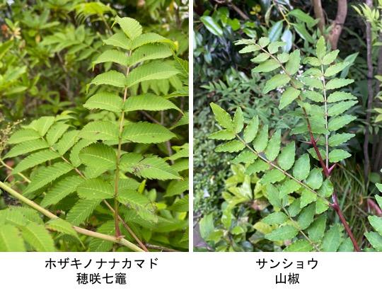 f:id:yachikusakusaki:20200530232719j:plain