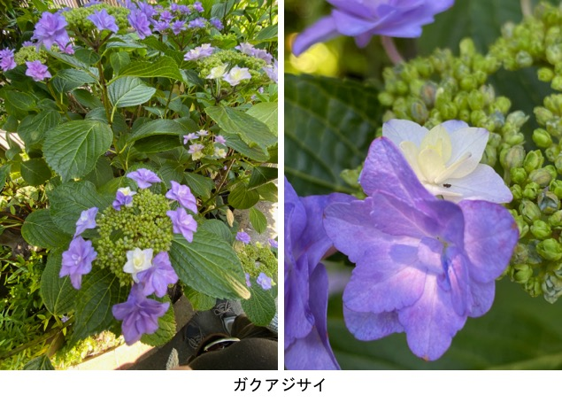 f:id:yachikusakusaki:20200530234915j:plain