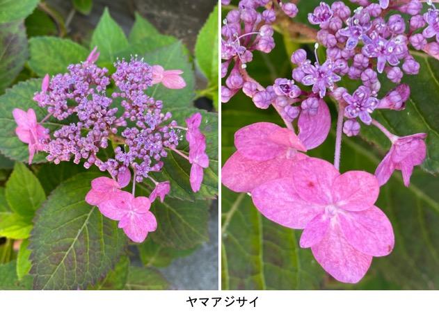 f:id:yachikusakusaki:20200530234934j:plain
