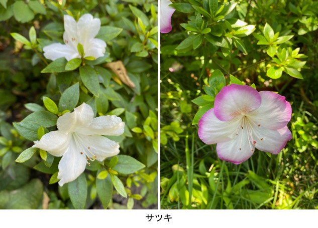 f:id:yachikusakusaki:20200530234959j:plain