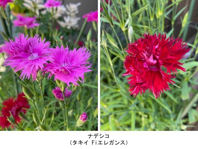 f:id:yachikusakusaki:20200530235017j:plain