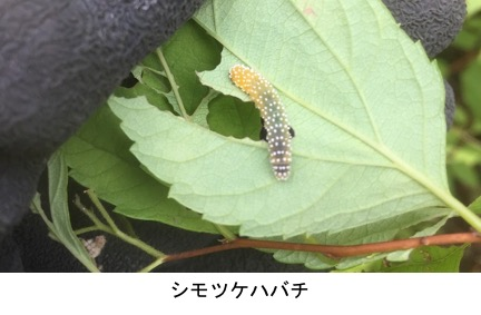 f:id:yachikusakusaki:20200603144313j:plain