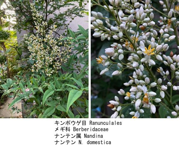 f:id:yachikusakusaki:20200603150629j:plain