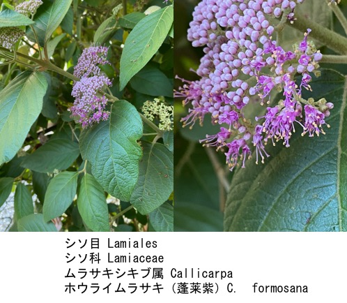 f:id:yachikusakusaki:20200603150633j:plain