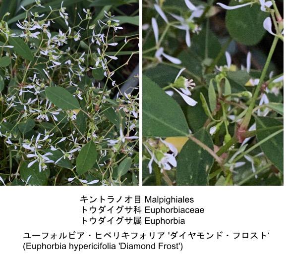 f:id:yachikusakusaki:20200603150637j:plain