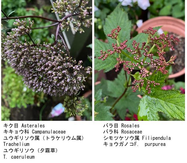 f:id:yachikusakusaki:20200603152250j:plain