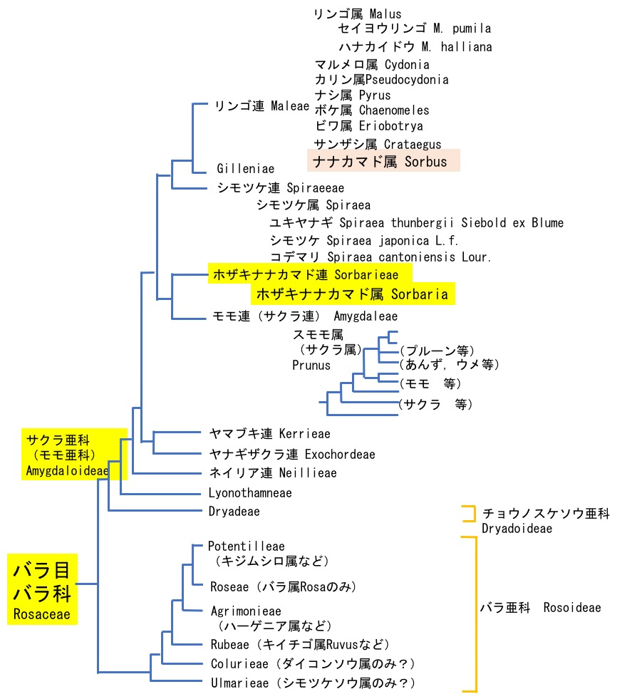 f:id:yachikusakusaki:20200603153153j:plain
