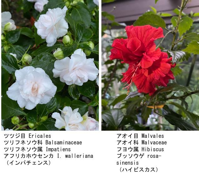 f:id:yachikusakusaki:20200603175250j:plain