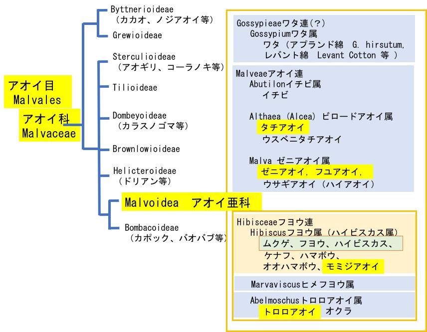 f:id:yachikusakusaki:20200623235450j:plain