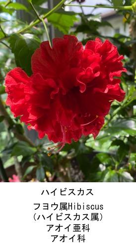 f:id:yachikusakusaki:20200623235553j:plain