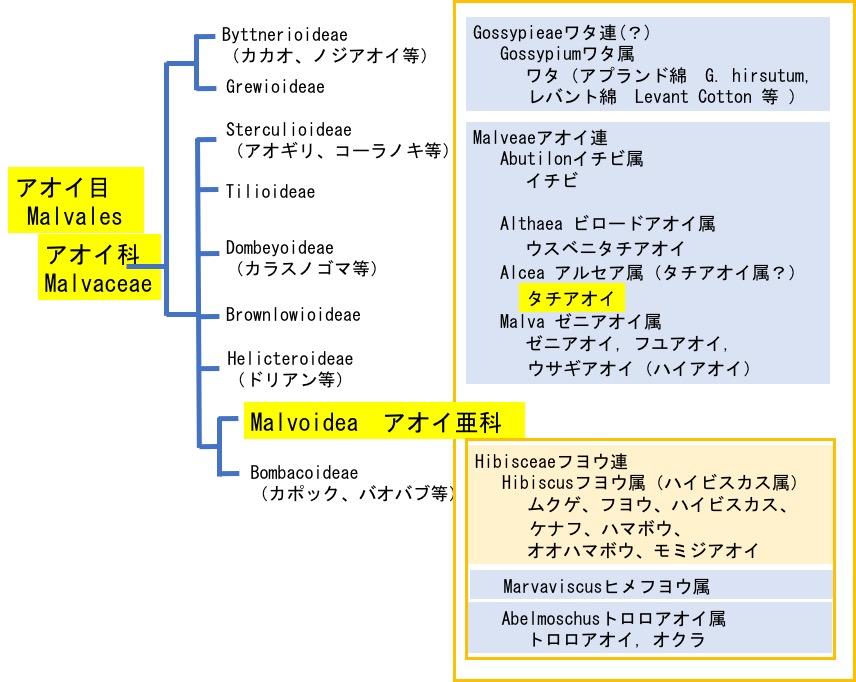 f:id:yachikusakusaki:20200625001225j:plain