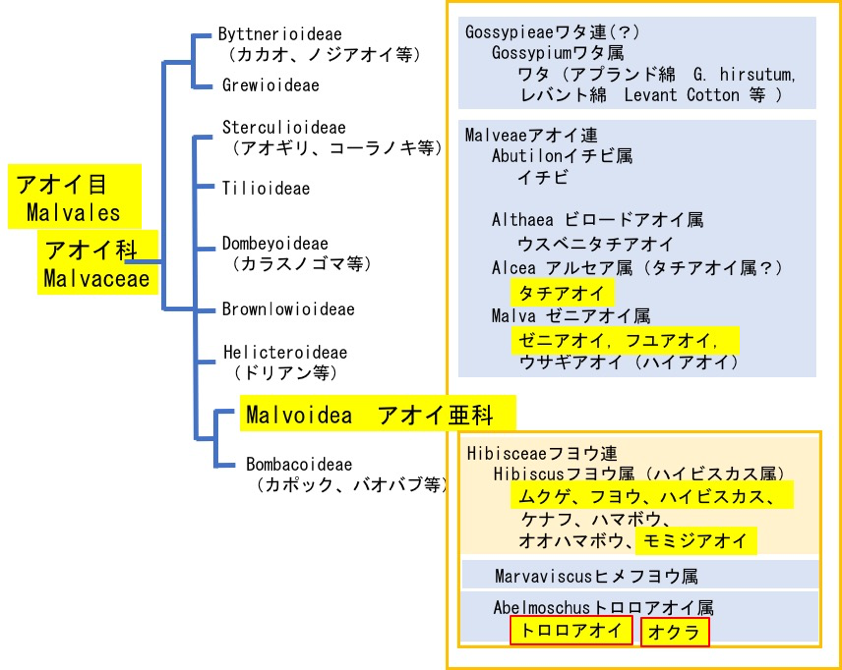 f:id:yachikusakusaki:20200625230950p:plain