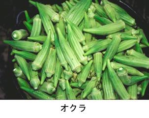 f:id:yachikusakusaki:20200625231938j:plain