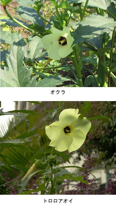 f:id:yachikusakusaki:20200625232044j:plain