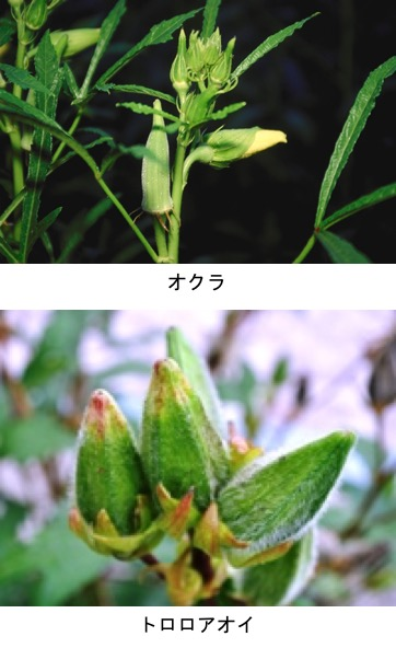 f:id:yachikusakusaki:20200625232141j:plain