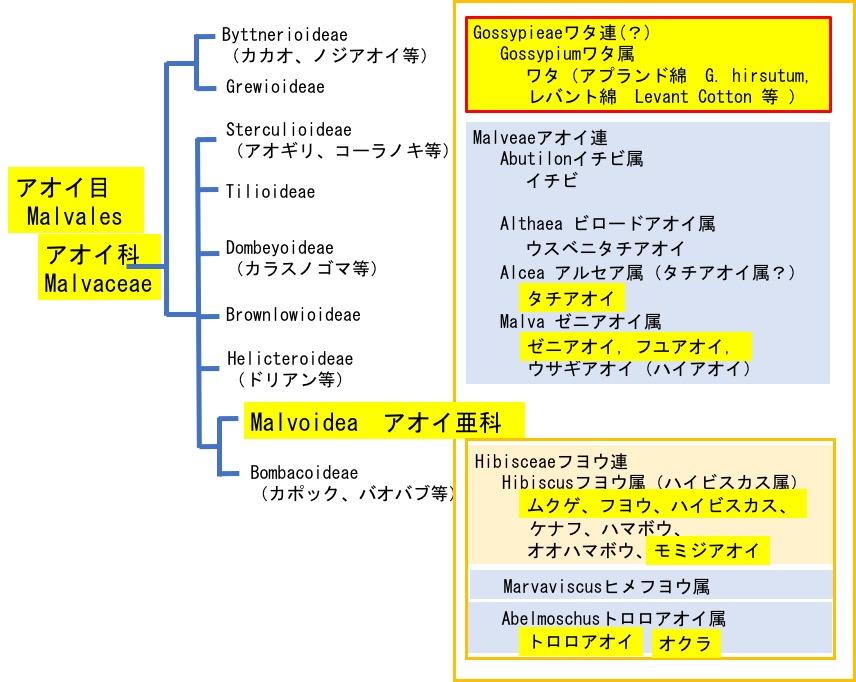 f:id:yachikusakusaki:20200627012455j:plain