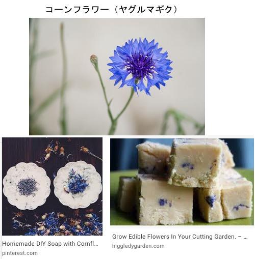 f:id:yachikusakusaki:20200710234859j:plain