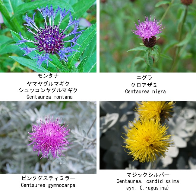 f:id:yachikusakusaki:20200722222444j:plain