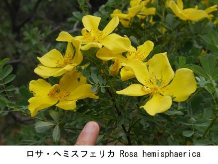 f:id:yachikusakusaki:20200806010237j:plain