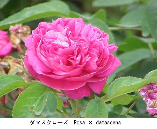f:id:yachikusakusaki:20200806011047j:plain