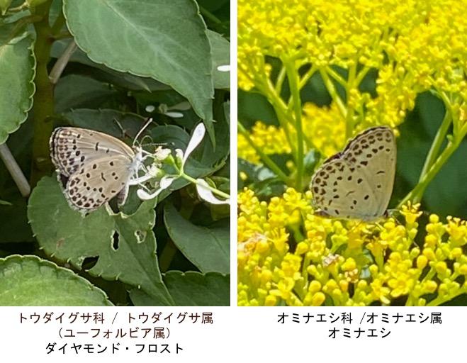 f:id:yachikusakusaki:20200811000216j:plain