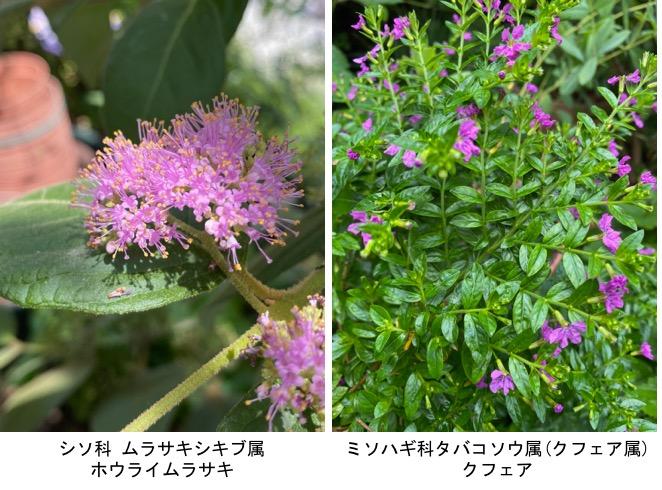 f:id:yachikusakusaki:20200811000316j:plain