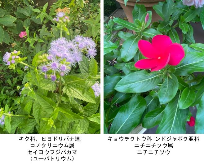 f:id:yachikusakusaki:20200811000354j:plain