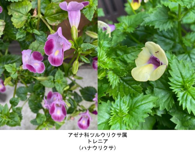 f:id:yachikusakusaki:20200811000436j:plain