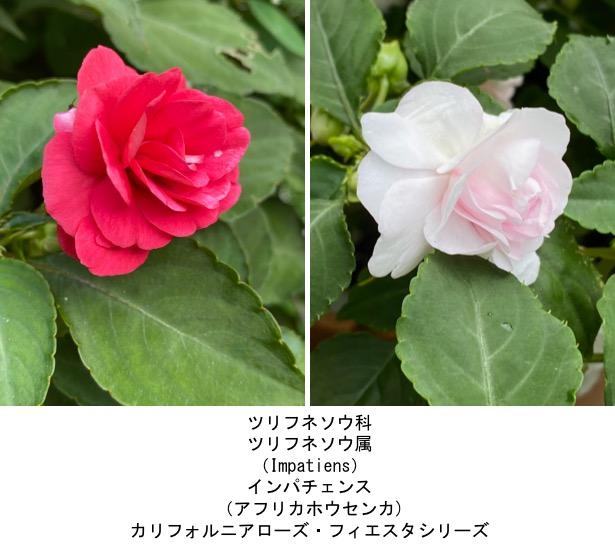 f:id:yachikusakusaki:20200811000543j:plain
