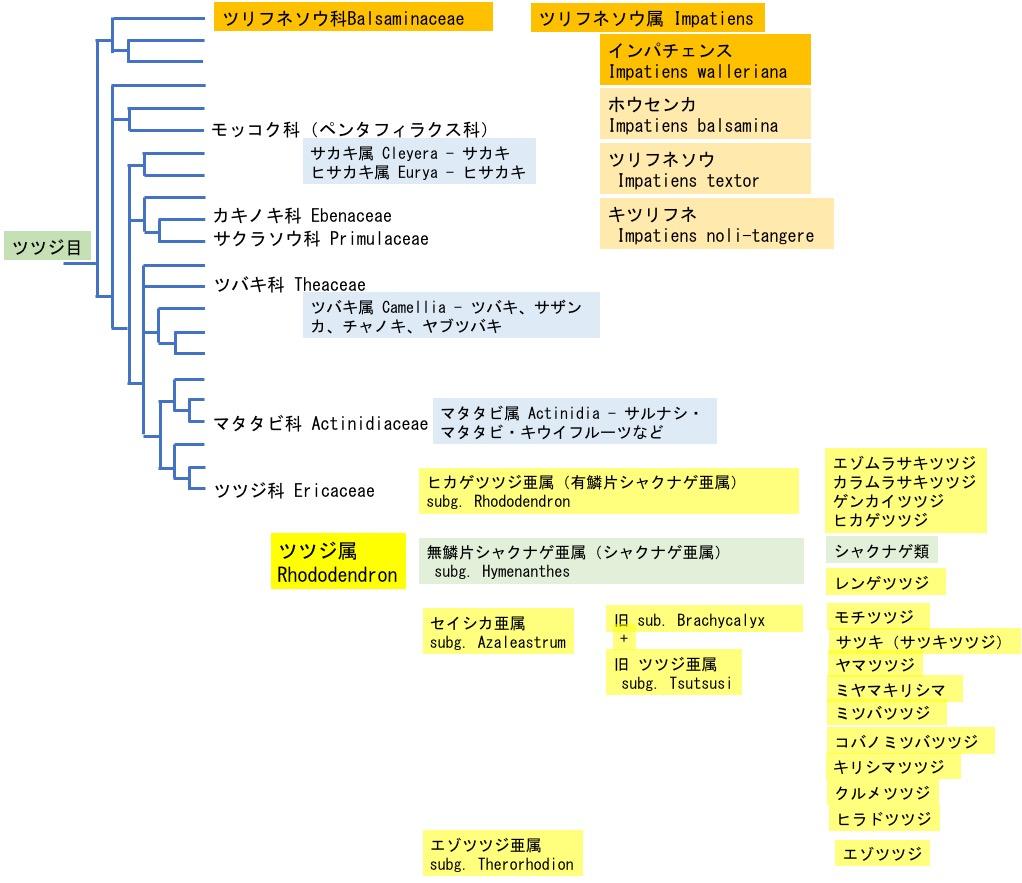 f:id:yachikusakusaki:20200811013917j:plain