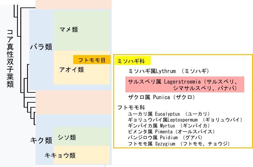 f:id:yachikusakusaki:20200812014246j:plain