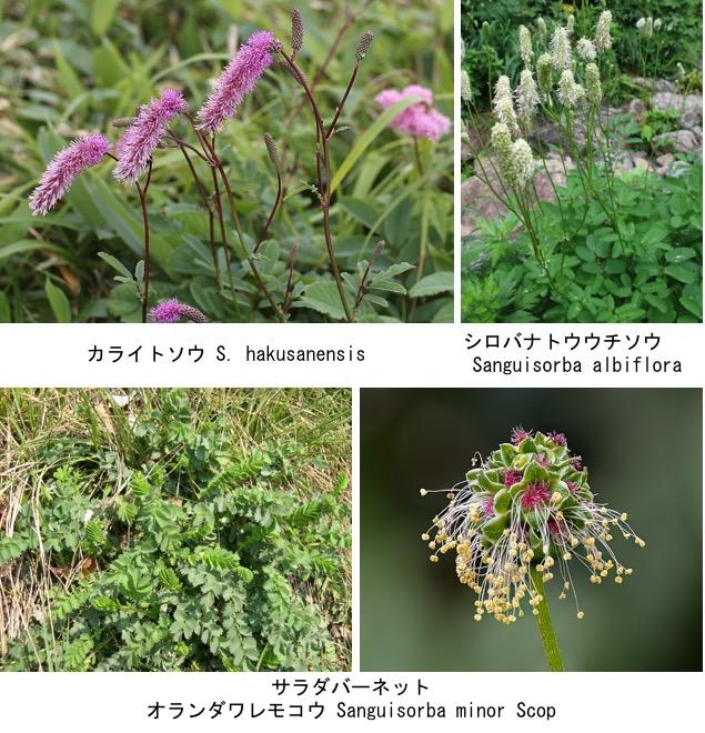 f:id:yachikusakusaki:20200814010821j:plain