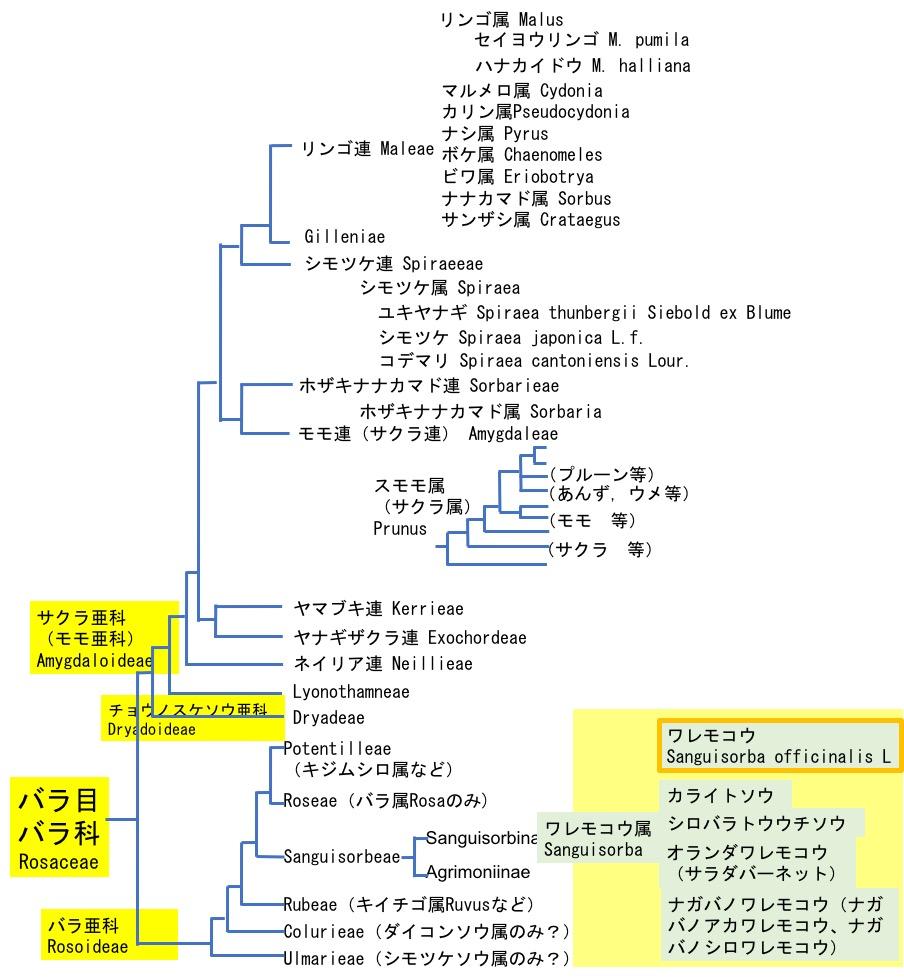 f:id:yachikusakusaki:20200814011307j:plain