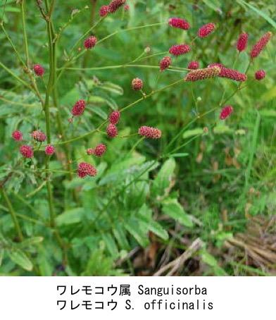 f:id:yachikusakusaki:20200814012746j:plain