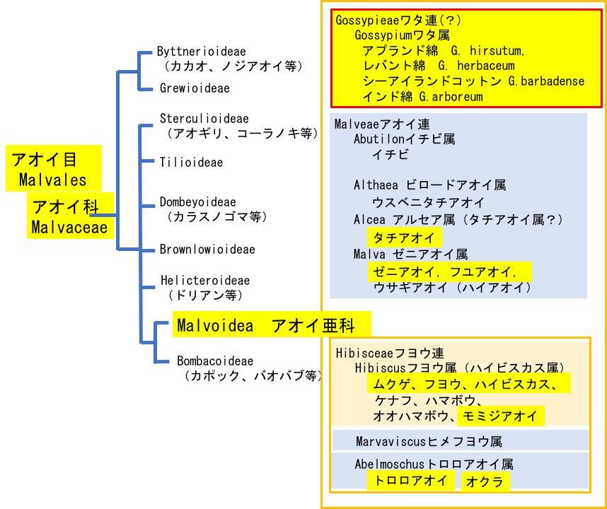 f:id:yachikusakusaki:20200815163900j:plain