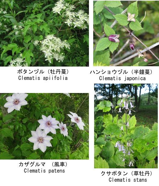 f:id:yachikusakusaki:20200817233551j:plain
