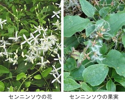 f:id:yachikusakusaki:20200817233853j:plain