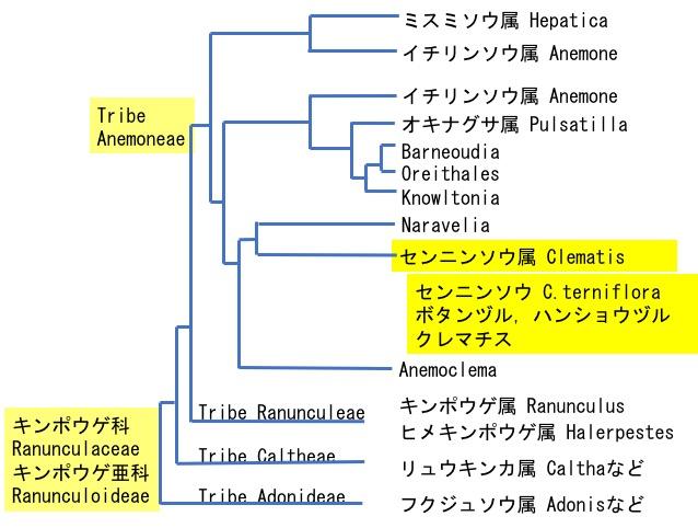 f:id:yachikusakusaki:20200818000415j:plain