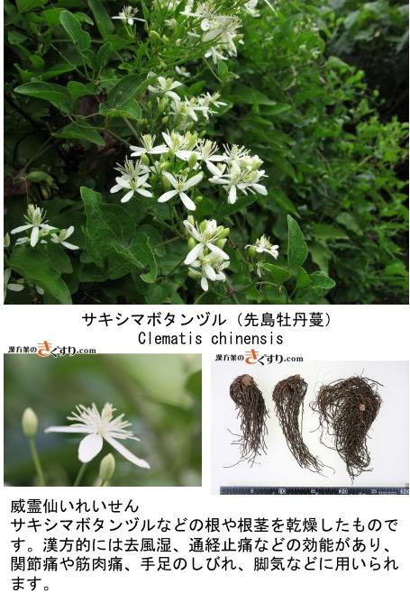 f:id:yachikusakusaki:20200818000818j:plain