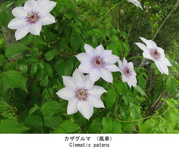 f:id:yachikusakusaki:20200819012157j:plain