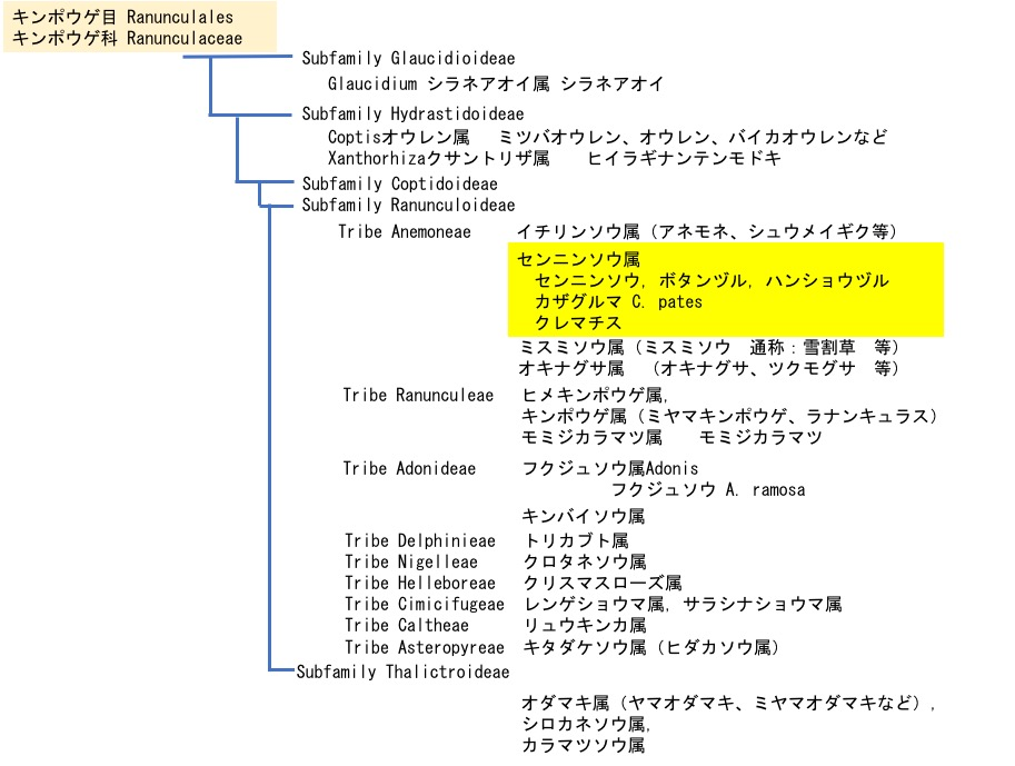 f:id:yachikusakusaki:20200819120430j:plain