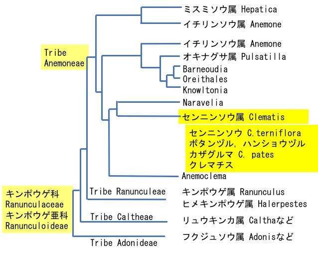 f:id:yachikusakusaki:20200819120441j:plain