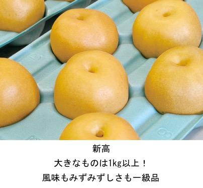 f:id:yachikusakusaki:20200831005252j:plain