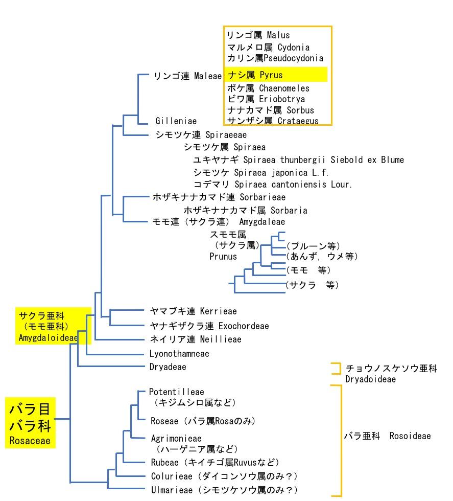 f:id:yachikusakusaki:20200831010403j:plain