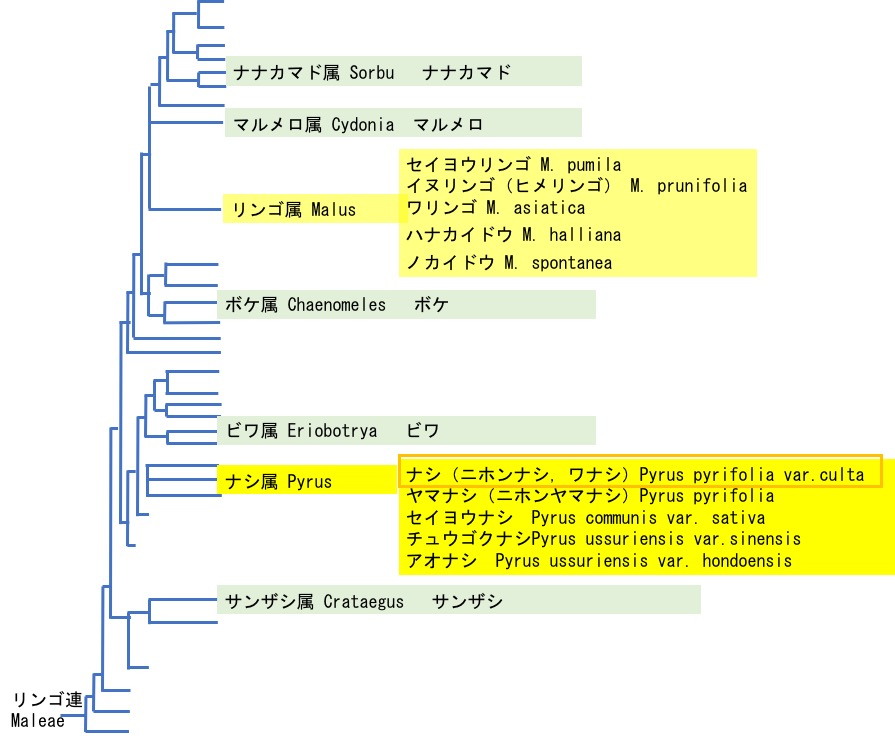 f:id:yachikusakusaki:20200831013901j:plain