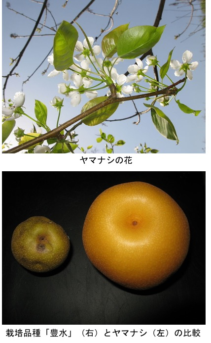 f:id:yachikusakusaki:20200901005238j:plain
