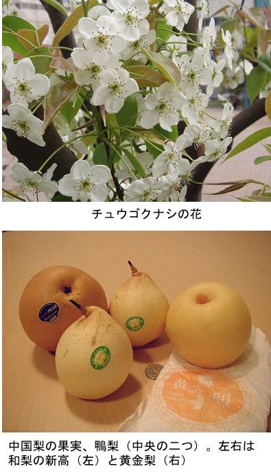 f:id:yachikusakusaki:20200901010831j:plain