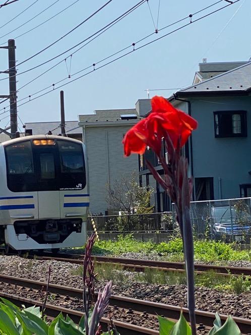 f:id:yachikusakusaki:20200905184747j:plain