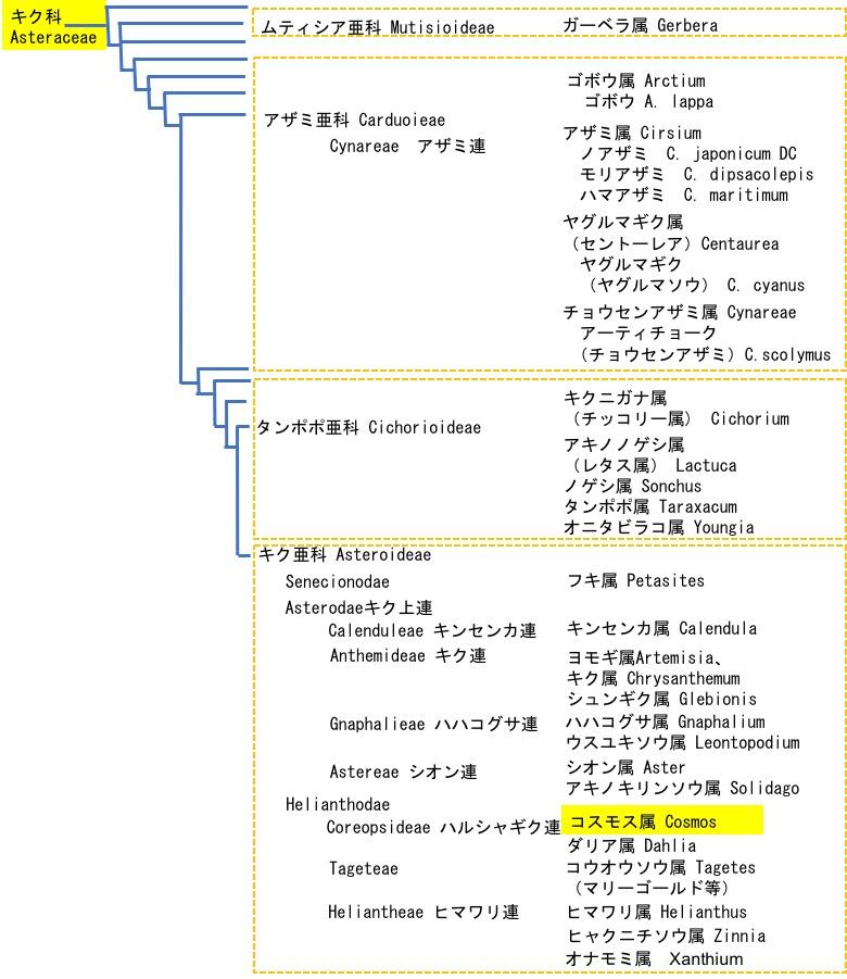 f:id:yachikusakusaki:20200915234323j:plain