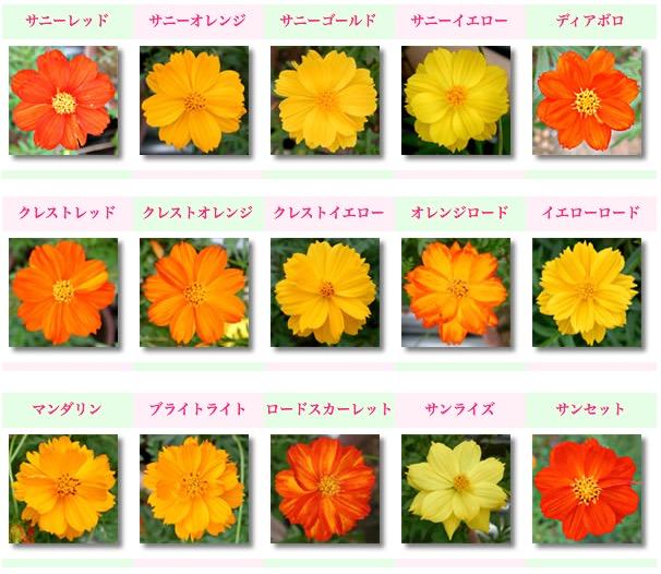f:id:yachikusakusaki:20200918211959j:plain
